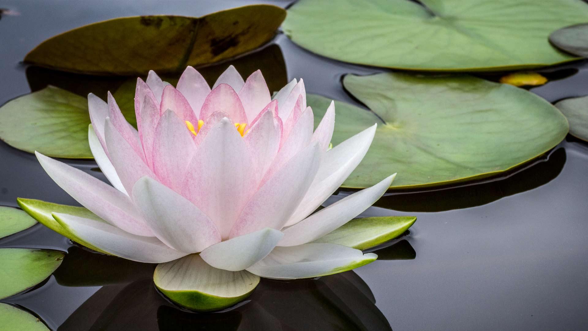 Jyoti Méditation France